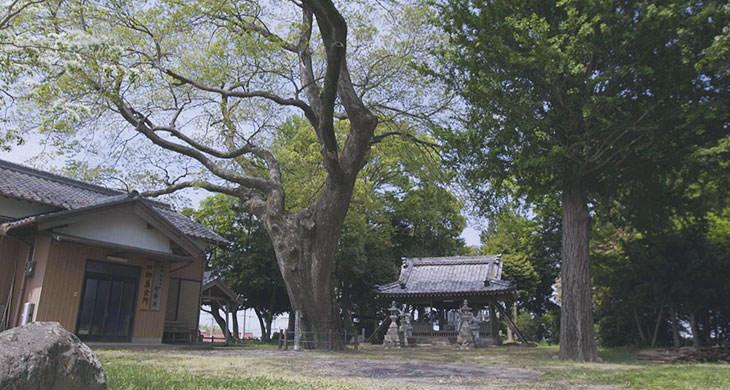 椋の木(神明神社)